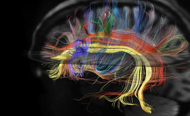 Understanding Drug Addiction Includes Awareness Of Brain Damage